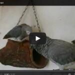 Video: Klopfzeichen