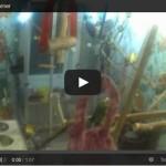 Video: Aufnahmen aus dem Vogelzimmer mit Überwachungskameras