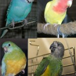Papagei und Sittich - Begriff und Systematik