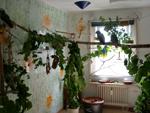 Vogelzimmer