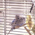 Mindestanforderungen an die Haltung von Papageien