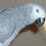 Falsche Motive für die Haltung von Papageien?