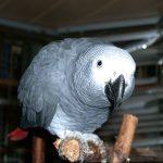 Links über Tiergartenbiologie