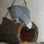 Bedeutung der Paarbindung für die Fortpflanzung von Papageien
